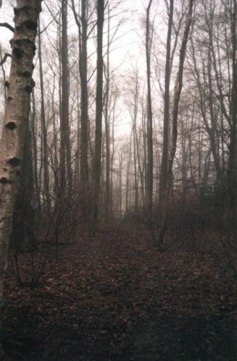 woodedpath2